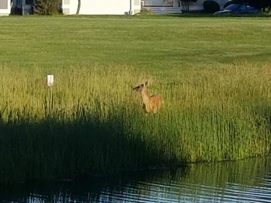 Bethany Bay Golf Club
