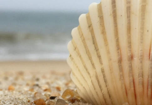 Top 15 Reasons to love (and visit!) Southern Delaware